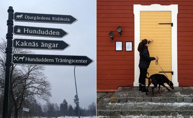 djurgårdens ridskola stockholm