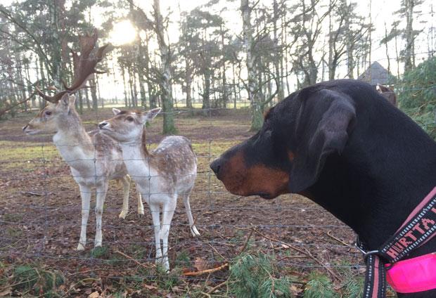 bambi13.4