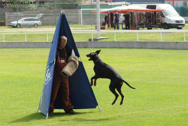 tyskhund14