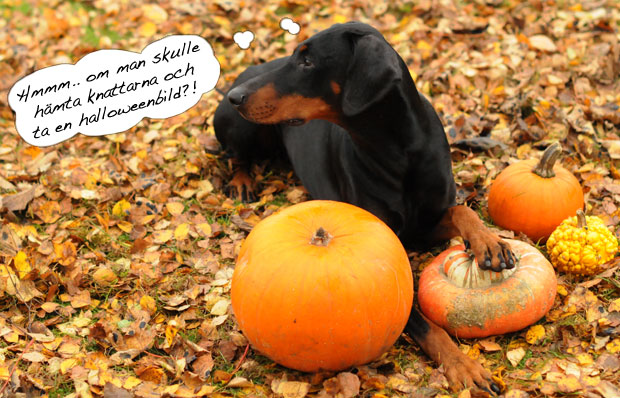 halloweenide14